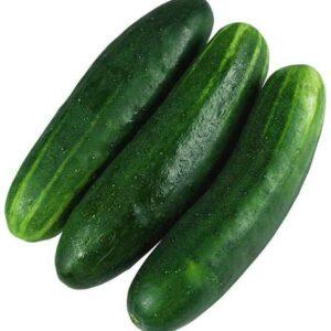 short cucumber